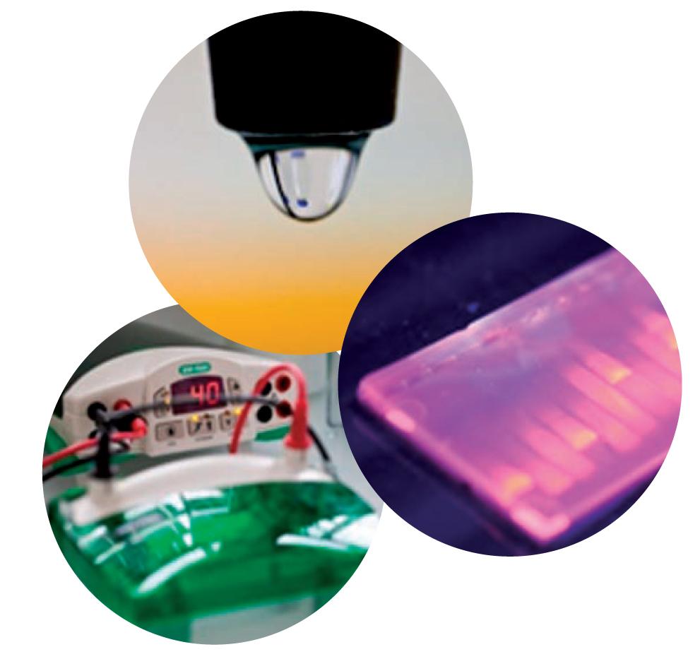 Licence professionnelle Méthodologies pour le diagnostic moléculaire et cellulaire